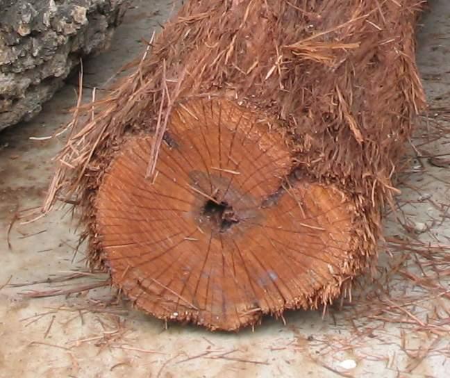 Hairy bark trees